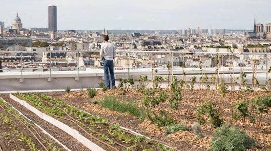 Grand-Paris-de-nouvelles-fermes-poussent-en-milieu-urbain