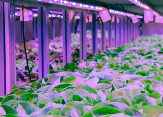 Agriculture Urbaine ferme souterraine